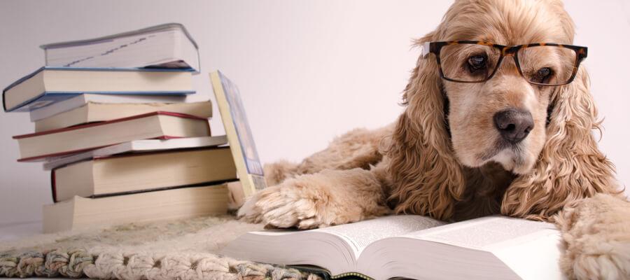 Dog-Reading2019-s