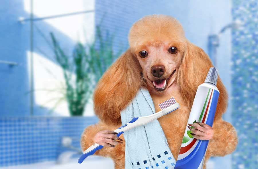 Celebrate National Pet Dental Health Month in Style!