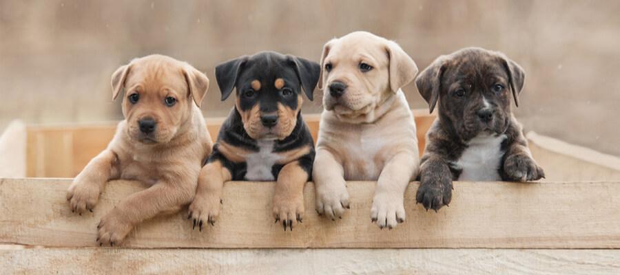 Preventing Parvo in Puppies