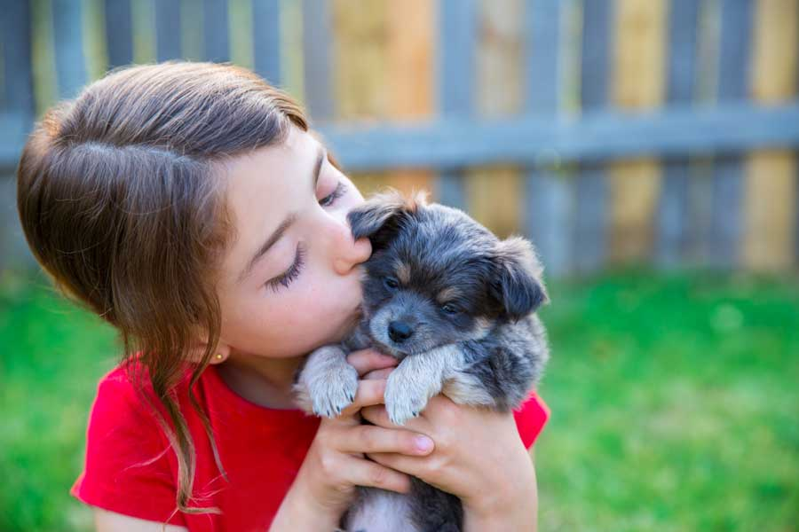 Puppy Vaccination