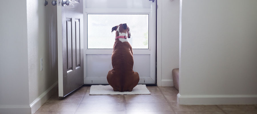dog waiting by the door