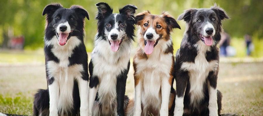Choosing Right Pet Boarding