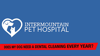 Does my pet need a dental cleaning every year