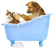 Dog and cat in bath