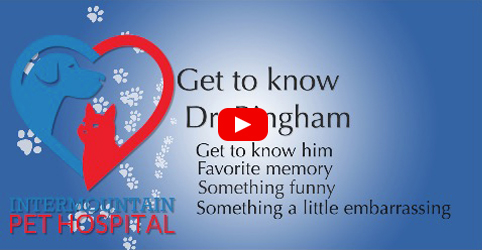 Get to know Dr. Bingham
