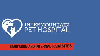 Heartworm and internal parasites