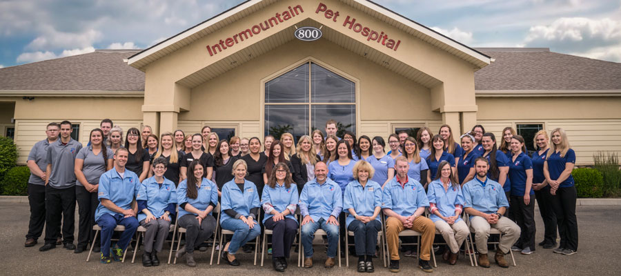 IPH Veterinarians and Supporting Staff