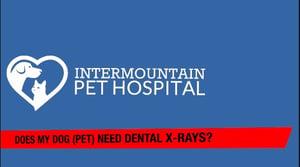 Does my pet need dental x-rays
