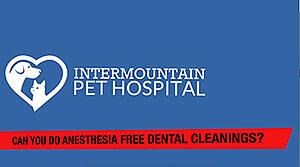 Why we dont do anesthesia free pet dental cleanings