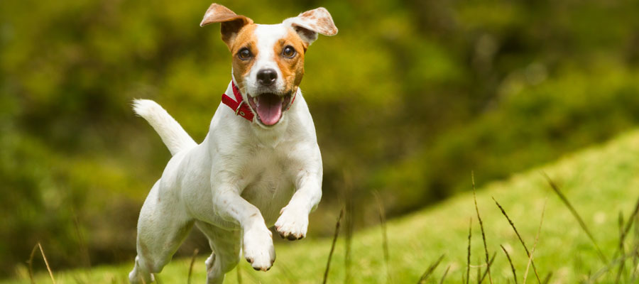 Orthopedic Care for Pets