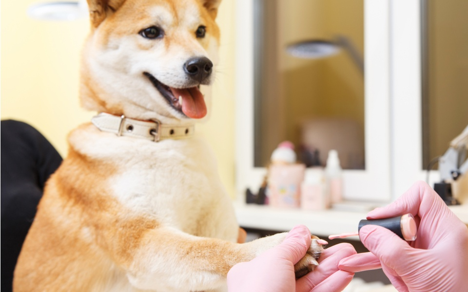 Pet Spa Services