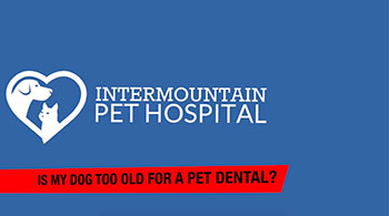 is my pet too old for a pet dental procedure