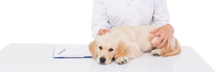 Pet Chiropractic - Veterinary Orthopedic Manipulation