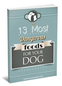 13 Most Dangerous Foods for Dogs
