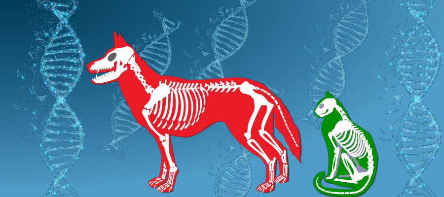 Regenerative  medicine for pets small