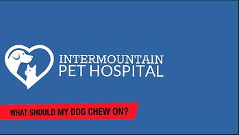 What should my dog chew on