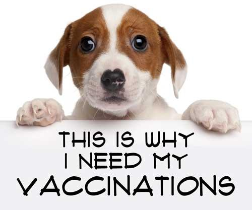 Dog Vaccination is important