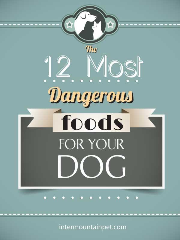 Dangerous foods for your dog