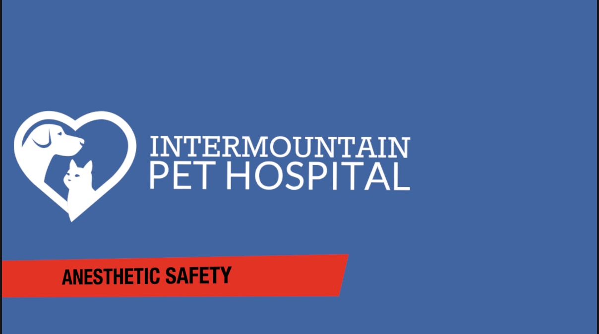 Pet Anesthesia Safety