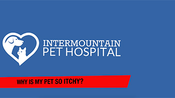 Reasons your pet might be itchy