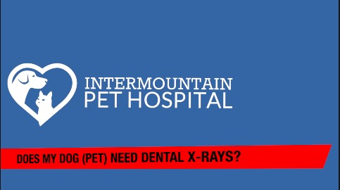 Does my pet need dental x-rays